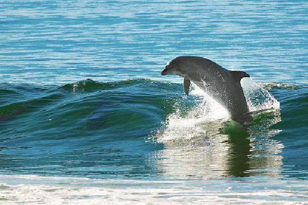 watch dolphins in Kenya